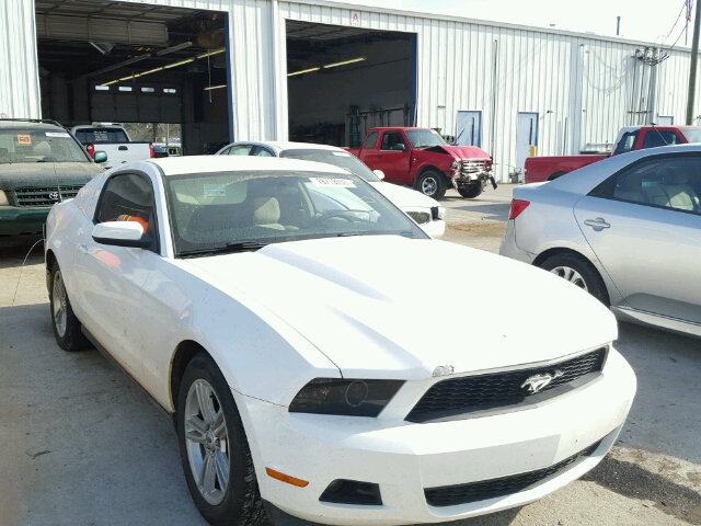 1ZVBP8AN3A5100916 - 2010 FORD MUSTANG