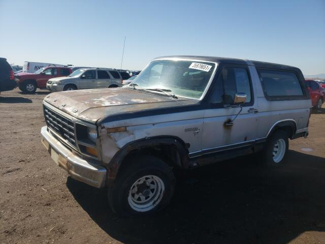 FORD BRONCO 1981 1